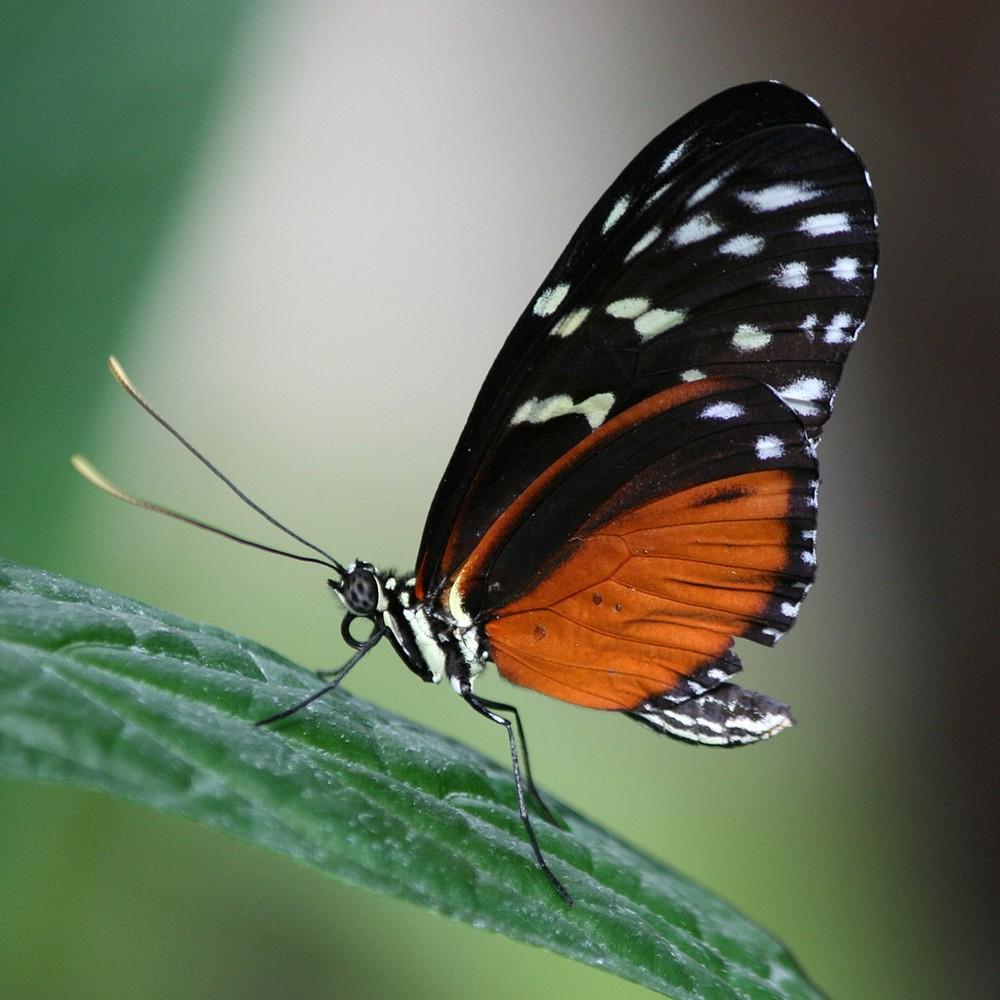 Schmetterlingsgarten Grevenmacher 2