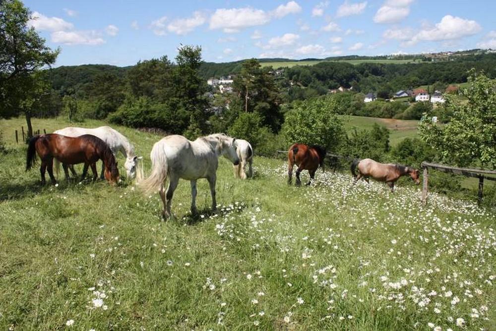 Nengshof Paardrijden 3
