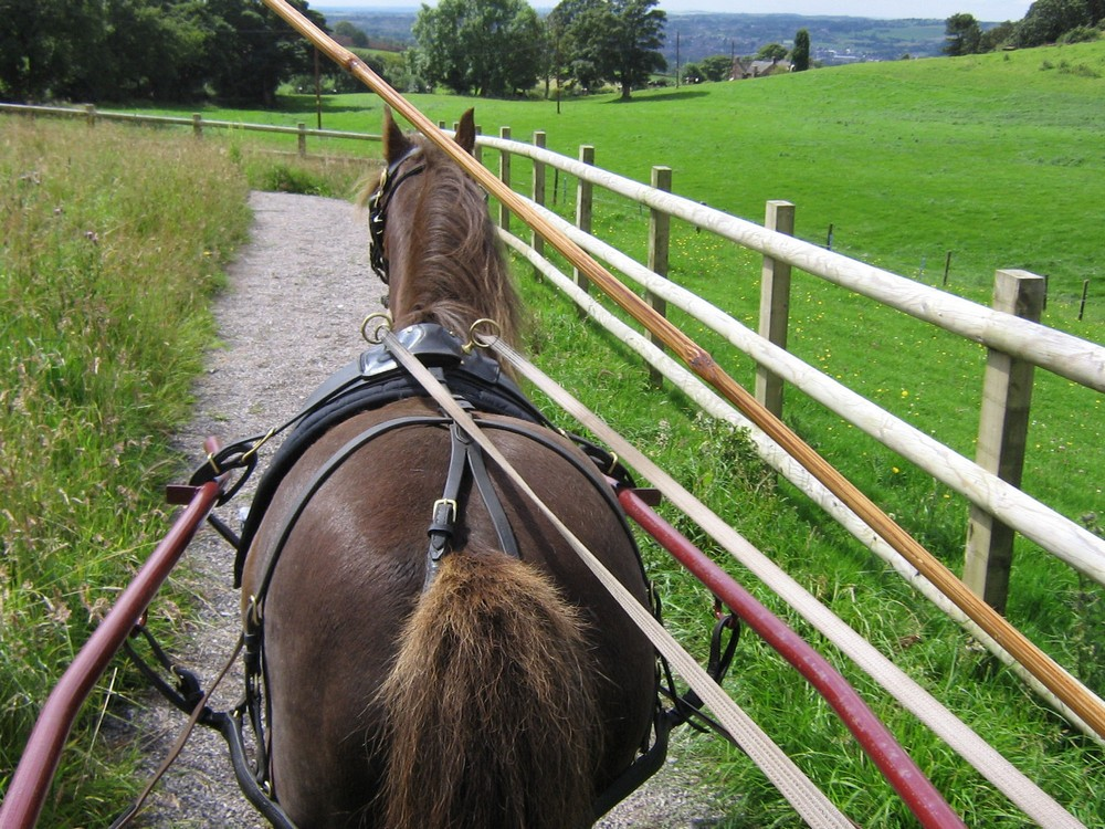 Nengshof Paardrijden 5