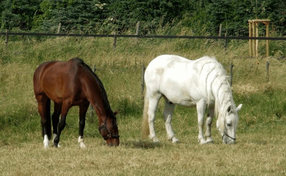 Nengshof Paardrijden 7